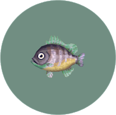 File:Bluegill (City Folk).png