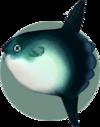 Ocean Sunfish (City Folk)