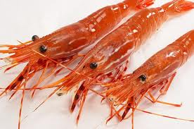 File:Real sweet shrimp.jpg