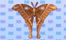 File:Oak silk moth encyclopedia (New Leaf).jpg