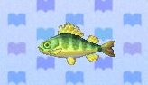 File:Yellow perch encyclopedia (New Leaf).jpg