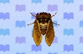 Brown cicada encyclopedia (New Leaf)