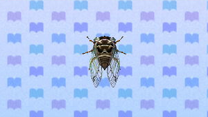 File:GiantCicadaNL.png