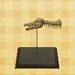 File:Spino skull (new leaf).jpg