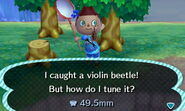 HNI 0074 violin beetle