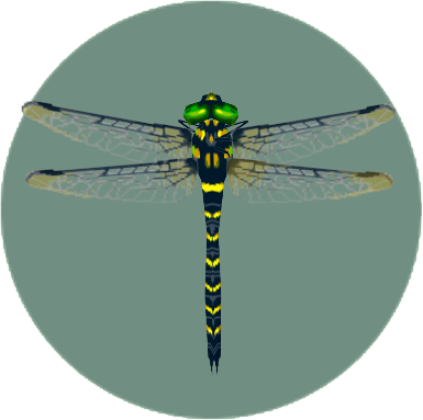 File:Banded Dragonfly (City Folk).png