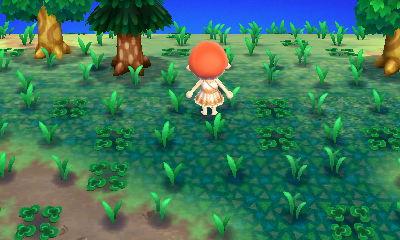 File:Weeds weeds weeds.jpg