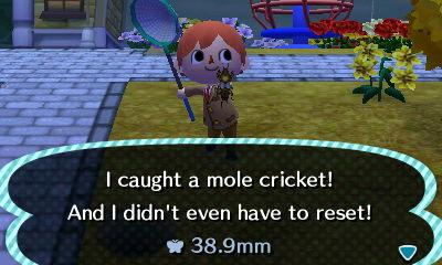 File:Mole Cricket Caught.JPG