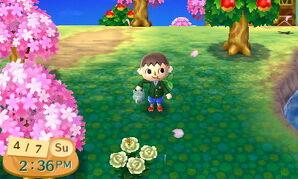 CherryBlossomNL2