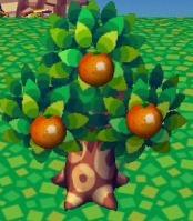 File:Orange Tree.jpg
