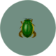 Diving Beetle (City Folk)