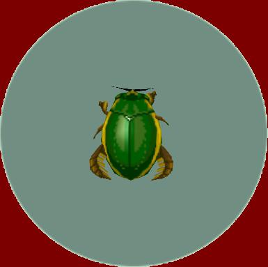 File:Diving Beetle (City Folk).png