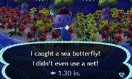 Sea butterfly 3