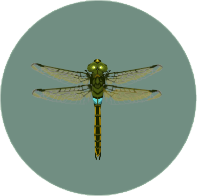 File:Darner Dragonfly (City Folk).png