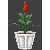File:Bromeliaceaecf.png