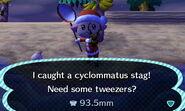 Cyclommatus caught