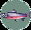 Salmon (City Folk)