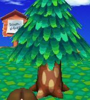 File:Cedar2.jpg