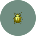 Scarab Beetle (City Folk)