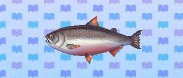 File:King salmon encyclopedia (New Leaf).JPG