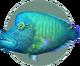 Napoleon Fish (City Folk)