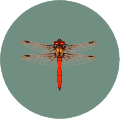 File:Red Dragonfly (City Folk).png