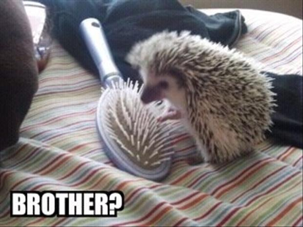 Funny Meme No Caption : Image funny animal pictures with captions g