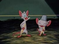 """Brain and his friend Pinky sing a song about """"Don Cerebro the Mouse"""""""