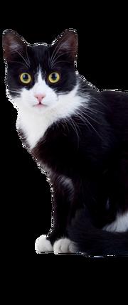 Fluffer McKitty cat rerelease visitor