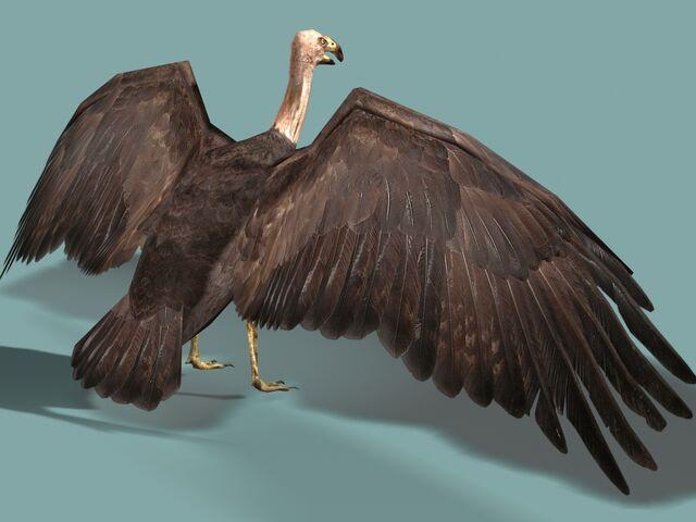 File:Vulture2.jpg