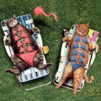 File:Sunbathing Cats Small.jpg