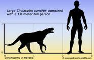 Thylacoleo-size