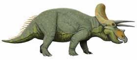 Modern Triceratops Reconstruction