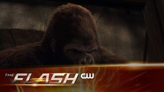 The Flash Attack on Gorilla City Extended Trailer The CW