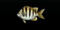 Alonzo Batilla's fisheries