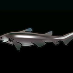 Goblin Shark - Rarity: Very Rare, Size: Large