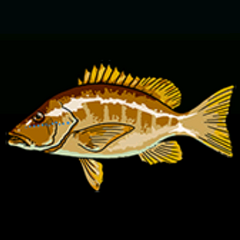 Schoolmaster - Rarity: Common, Size: Small