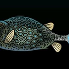 Honeycomb Cowfish - Rarity: Rare, Size: Small
