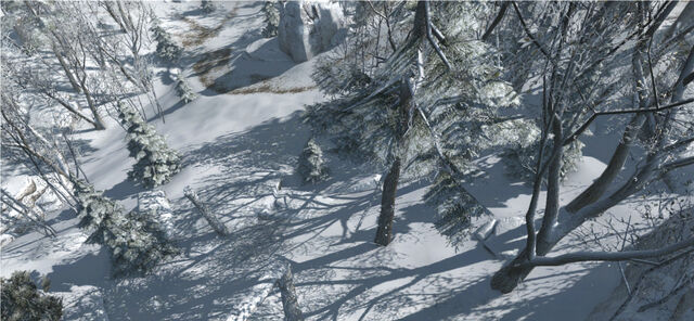 File:Snow covered forest in the Frontier.jpg