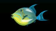 QueenTriggerfishACP