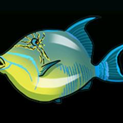 Queen Triggerfish - Rarity: Very Rare, Size: Medium