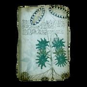 AC4BF Voynich Manuscript - Folio 33v