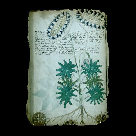File:AC4BF Voynich Manuscript - Folio 33v.png