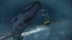 The-White-Whale6ACP