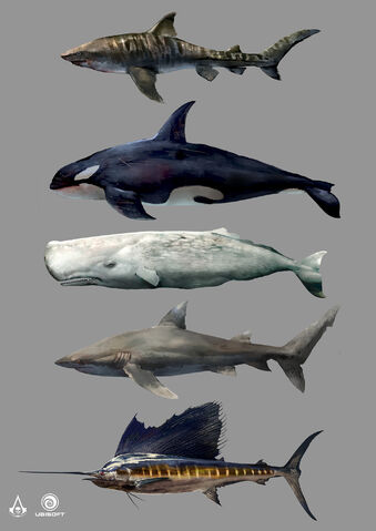 File:AC4 Marine Animals - Concept Art.jpg