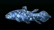 CoelacanthACP