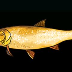 Golden Dorado - Rarity: Common, Size: Large