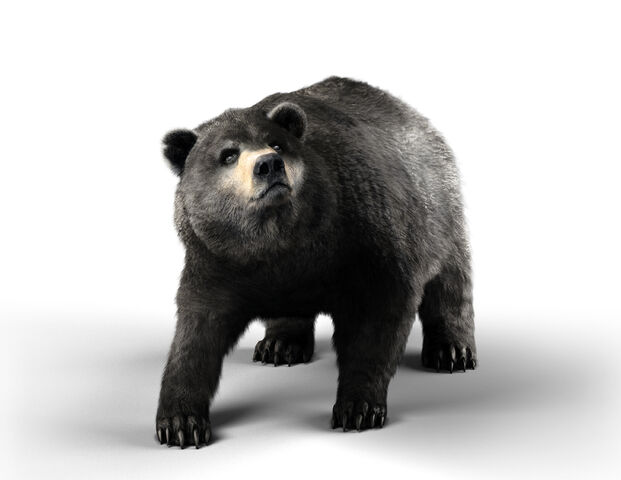 File:Soloplayer - Bear.jpg