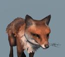 Database: Fox