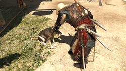 AC4 Edward Dog